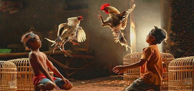 Sabung Ayam Online Terbaik